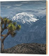 Joshua Tree At Keys View In Joshua Park National Park Wood Print