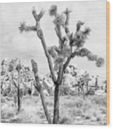 Joshua Tree Branches Wood Print