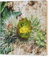 Joshua Tree Cactus Bloom II Wood Print