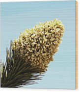 Joshua Tree Cone Wood Print