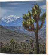 Joshua Tree In Joshua Park National Park With The Little San Bernardino Mountains In The Background Wood Print