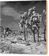 Joshua Trees In Snow Wood Print