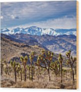 Joshua Tree National Park 2 Wood Print