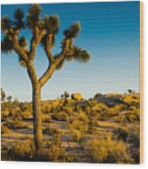 Joshua Tree Panoramic Wood Print