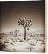 Joshua Tree Taken With A #holga  #film Wood Print