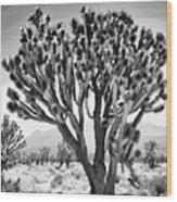 Joshua Trees Bw Wood Print