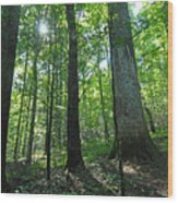 Joyce Kilmer Forest Wood Print