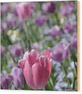 Joyful Tulip Wood Print