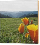Jubilant Poppies Wood Print