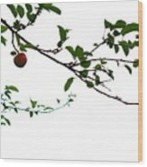 Juicy   A Tempting Photograph Of A Tasty Ripe Red Apple On A Tree  Wood Print