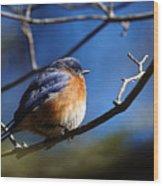 Juicy Male Eastern Bluebird Wood Print
