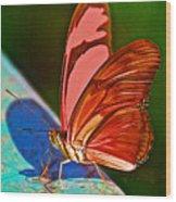 Julia Heliconian Butterfly In Iguazu Falls National Park-brazil Wood Print