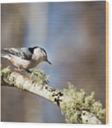 Jump - White-breasted Nuthatch Wood Print