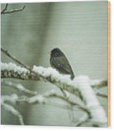 Junco In New Fallen Snow Wood Print
