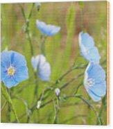 June 6 2010 Wood Print