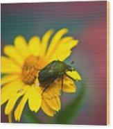 June Beetle Wood Print