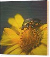 June Beetle Exploring Wood Print