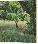 June Doe In Tall Grass Wood Print