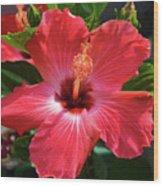 June Morning Hibiscus Wood Print