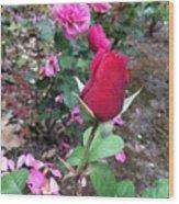 June Rose #2 Wood Print