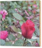 June Rose #4 Wood Print