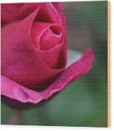 June Rose #7 Wood Print