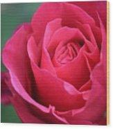 June Rose #8 Wood Print