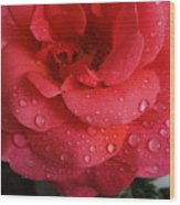 June  Rose  Wood Print