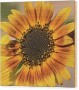 June Sunflowers #2 Wood Print