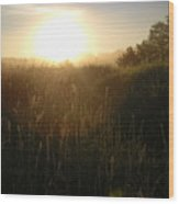June Sunrise Over Dew On Grass Wood Print