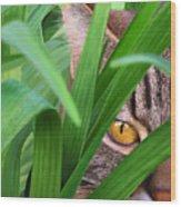 Jungle Cat Wood Print by Bob Nolin