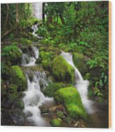 Jungle Falls Wood Print