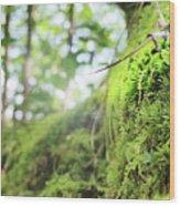 Jungle Gym Wood Print