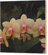 Jungle Orchids Wood Print