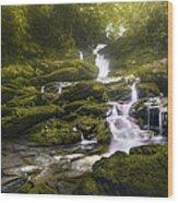 Jungle Riverflow Scene Wood Print