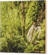 Jungle Steams Wood Print