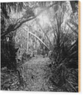 Jungle Trail Wood Print