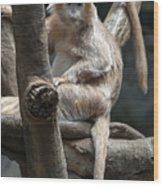 Jungle World Monkey2 Wood Print