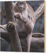 Jungle World Monkey3 Wood Print