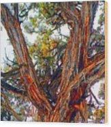 Juniper Bark Wood Print