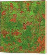 Juniper Berries 1 30 Wood Print