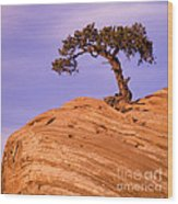 Juniper On Sandstone Wood Print