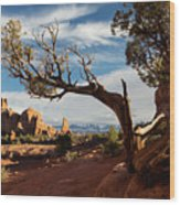 Juniper Tree And Sandstone Fins Wood Print