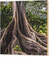 Jurassic Park Tree Roots Wood Print