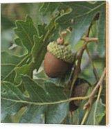 Just A Nut Wood Print