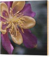 Just A Pretty Flower Wood Print