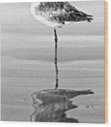 Just Being Coy - Bw Wood Print