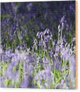 Just Bluebells  Wood Print