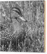 Just Ducky Bw Wood Print