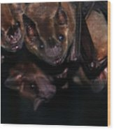 Just Hanging Around - Bats Wood Print